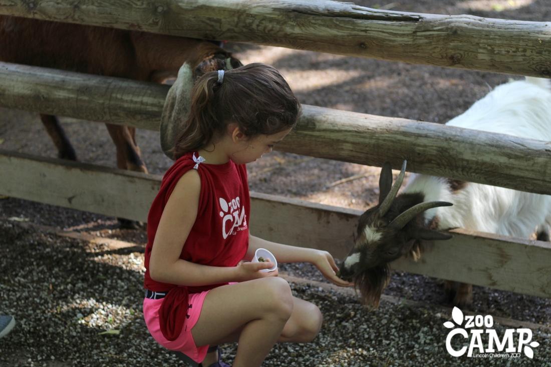 Camp_goats_6-7_0020