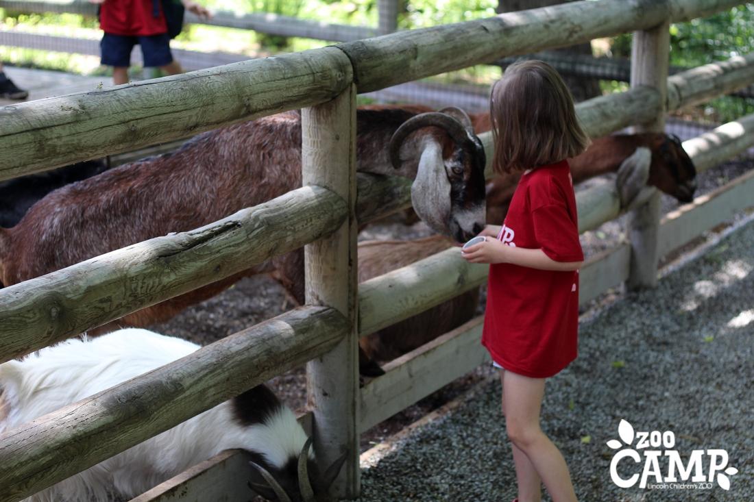 Camp_goats_6-7_0028.jpg