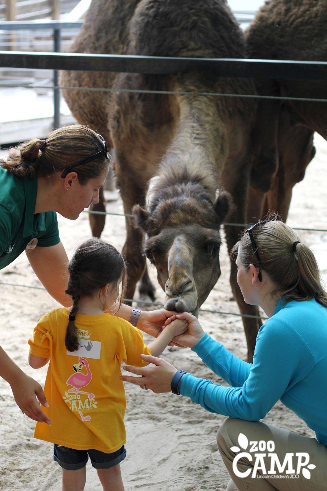 Camp_camels_3-4_0735.jpg