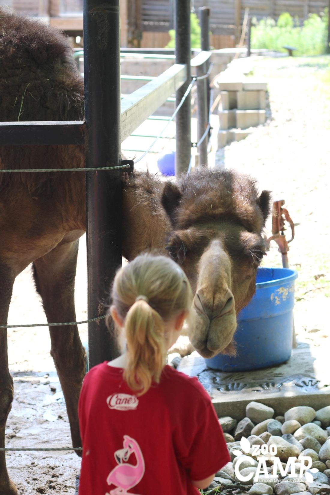 Camp_camels_6-7_1224 copy
