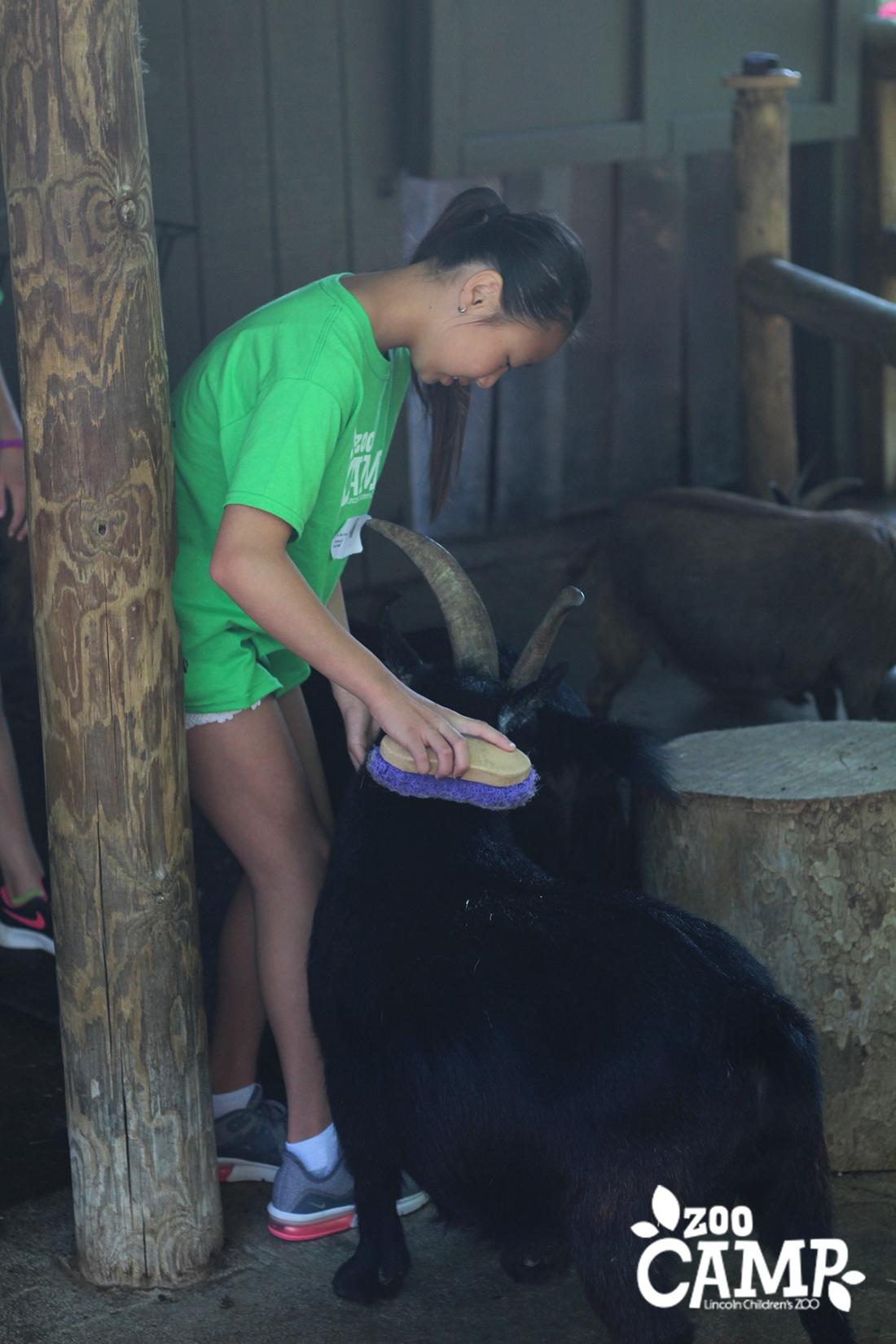 Camp_goats_10-12_0482