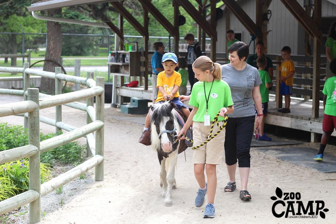 Camp_horses_3-4_0966 copy
