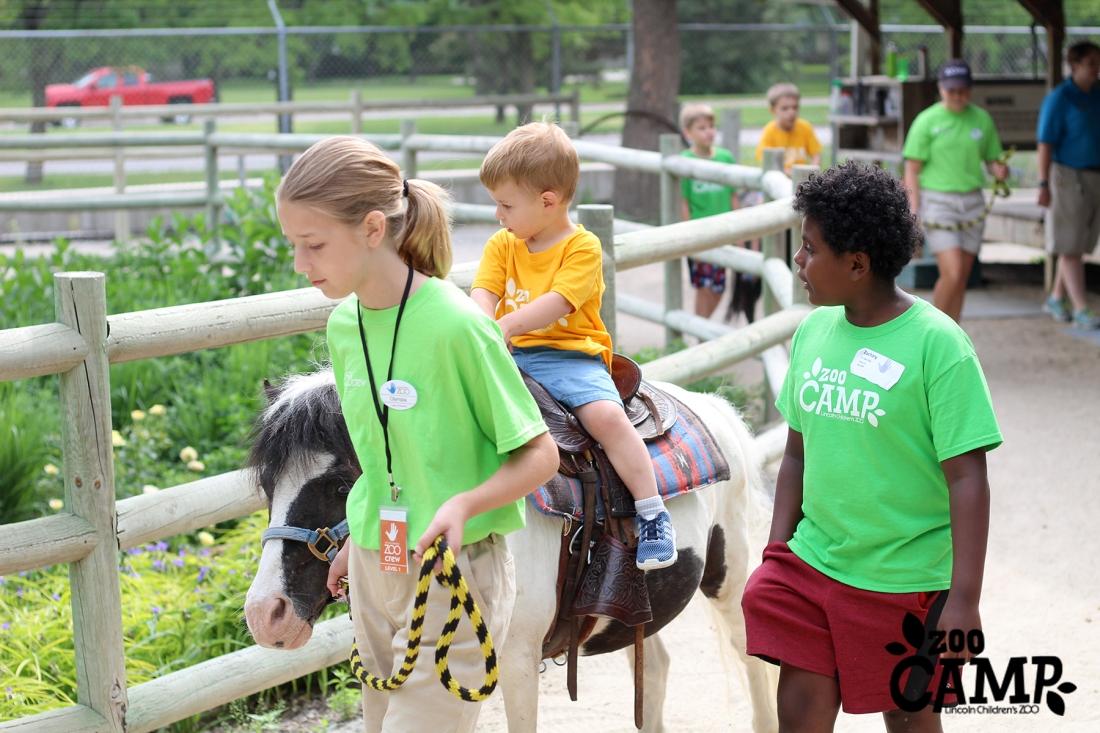 Camp_horses_3-4_0972 copy