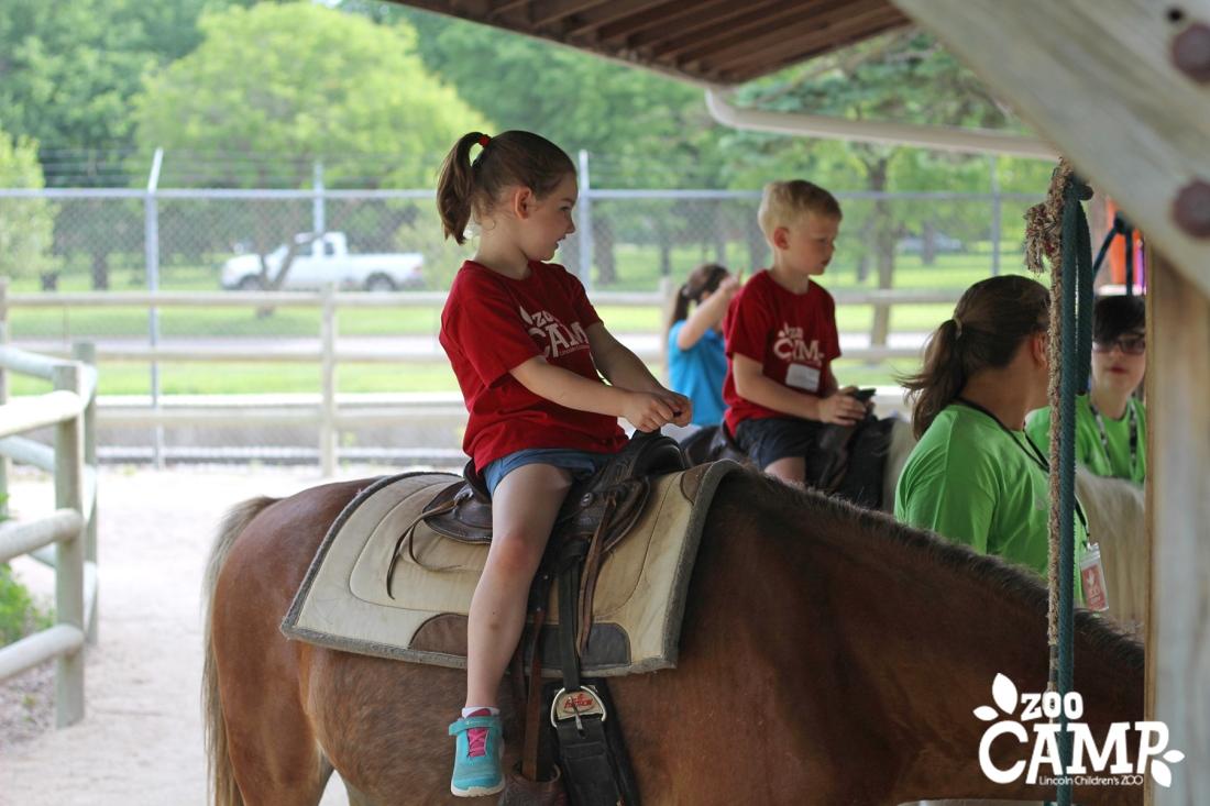 Camp_horses_6-7_0684