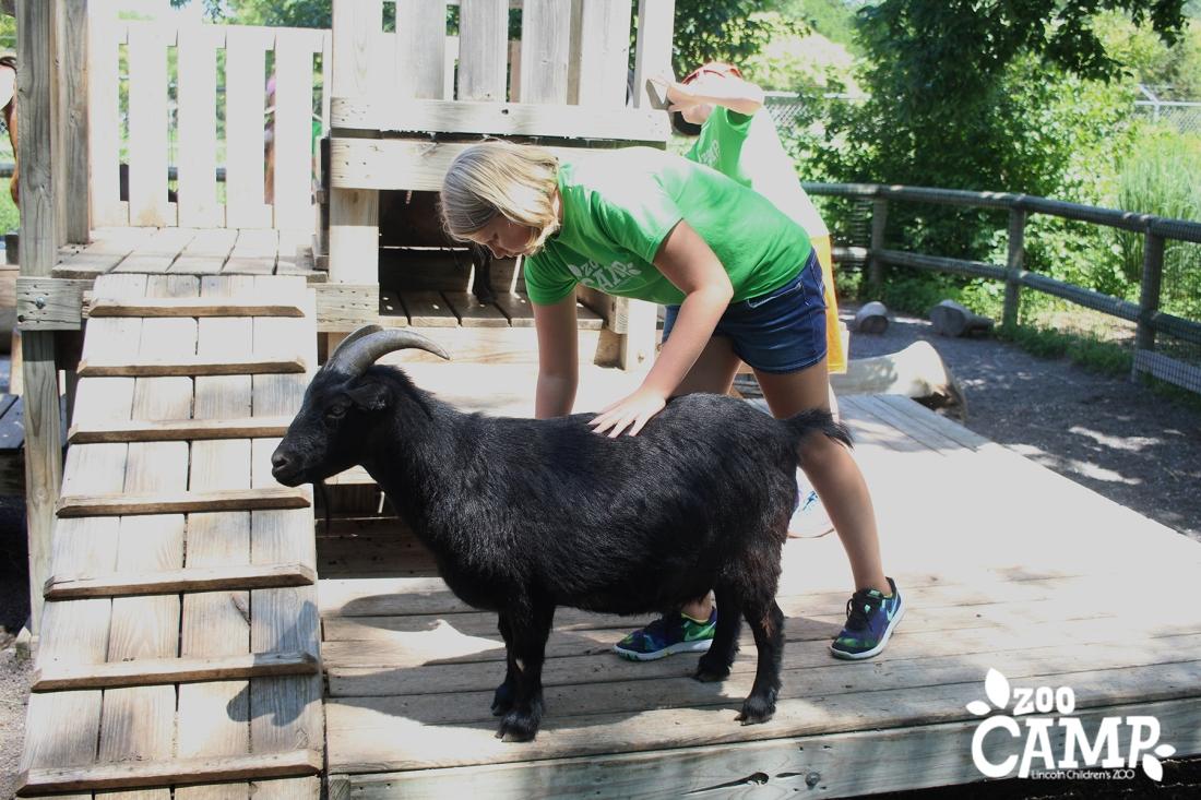 Camp_goats_10-12_3401 copy.jpg