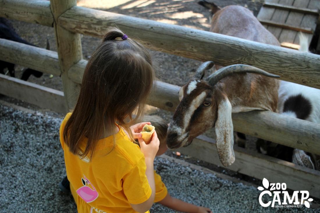 Camp_goats_3-4_2667 copy