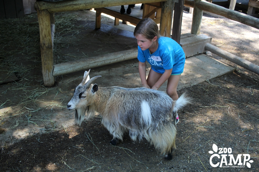 Camp_goats_4-5_2949 copy.jpg