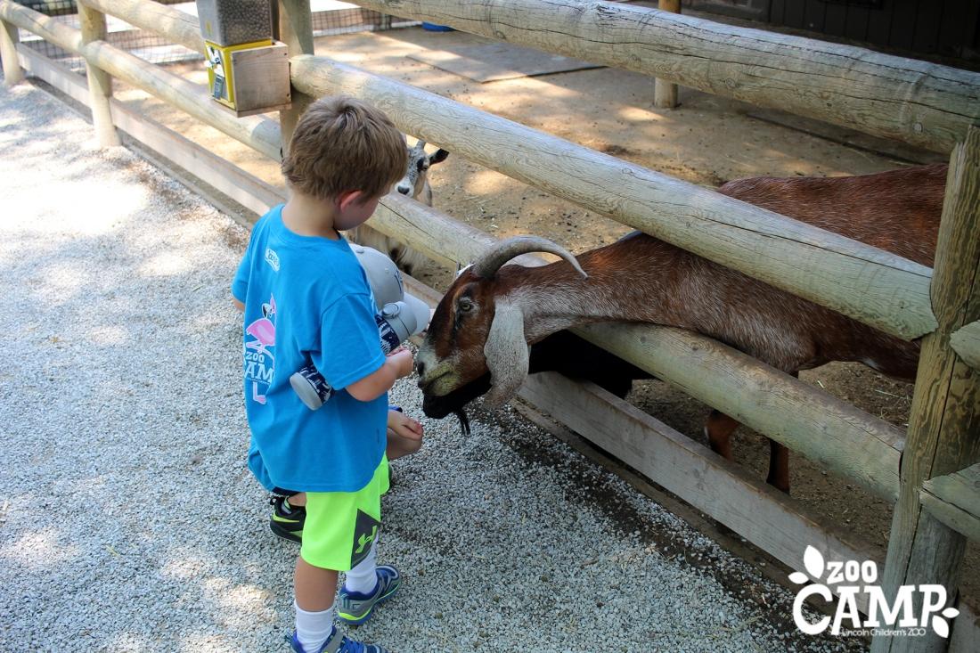 Camp_goats_4-5_3977.jpg