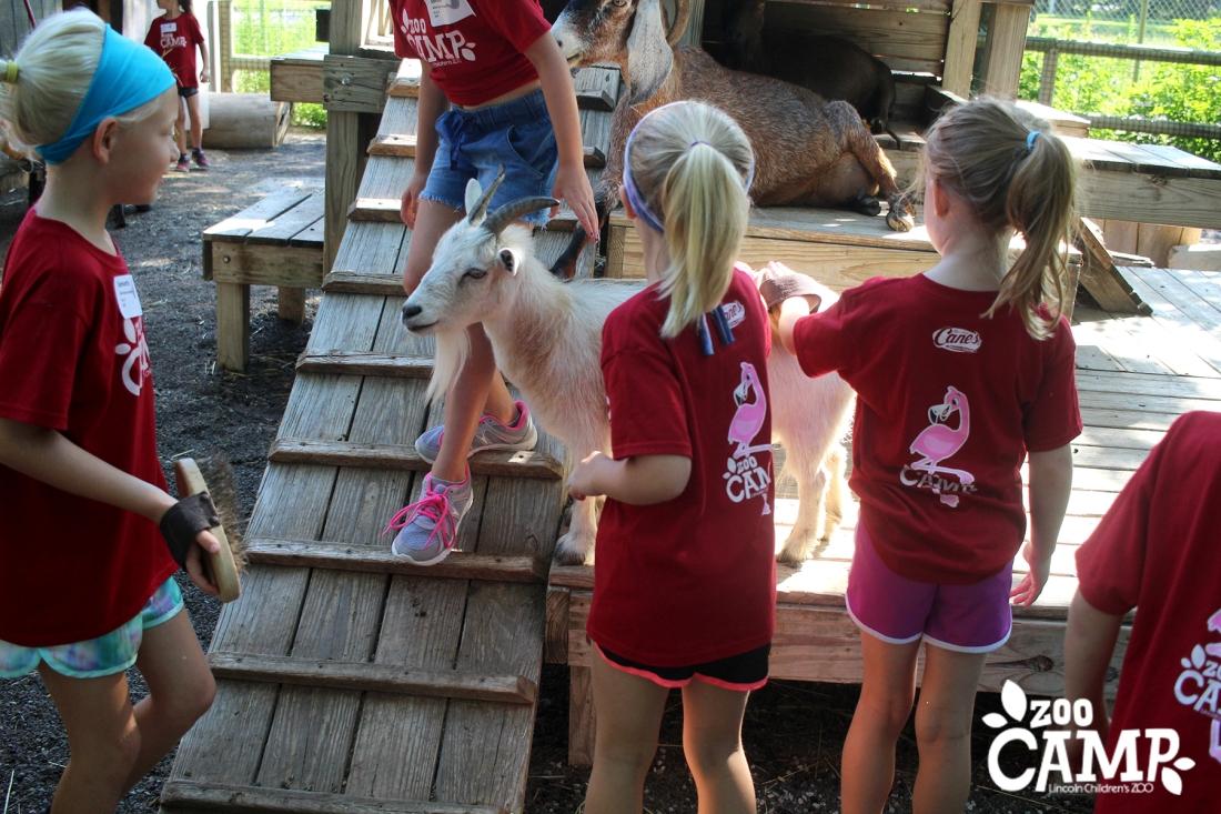 Camp_goats_6-7_2840