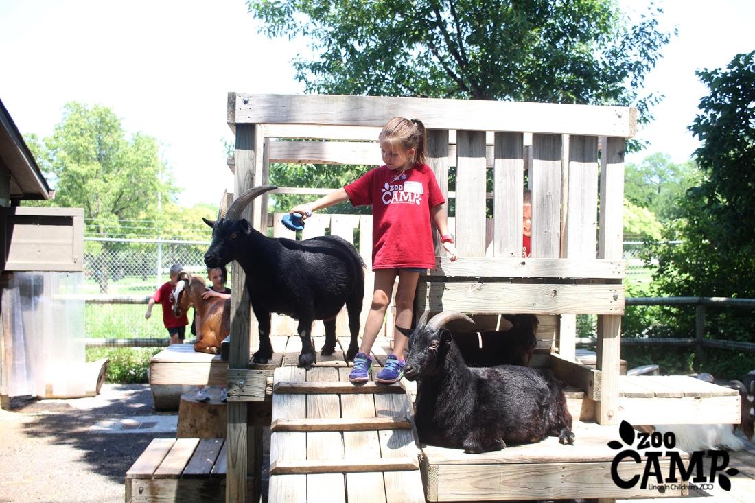 Camp_goats_6-7_2940 copy.jpg