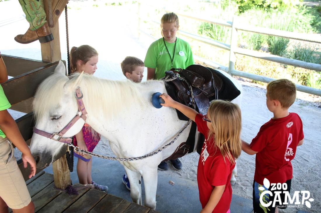 Camp_horses_6-7_3655 copy