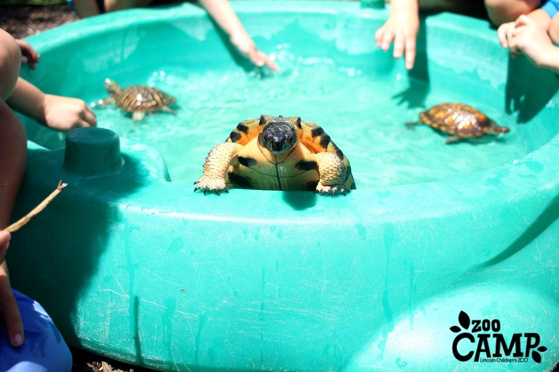 Camp_turtles_4-5_2599 copy.jpg