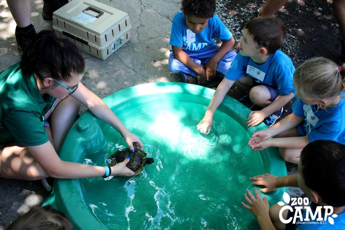 Camp_turtles_4-5_2601 copy.jpg